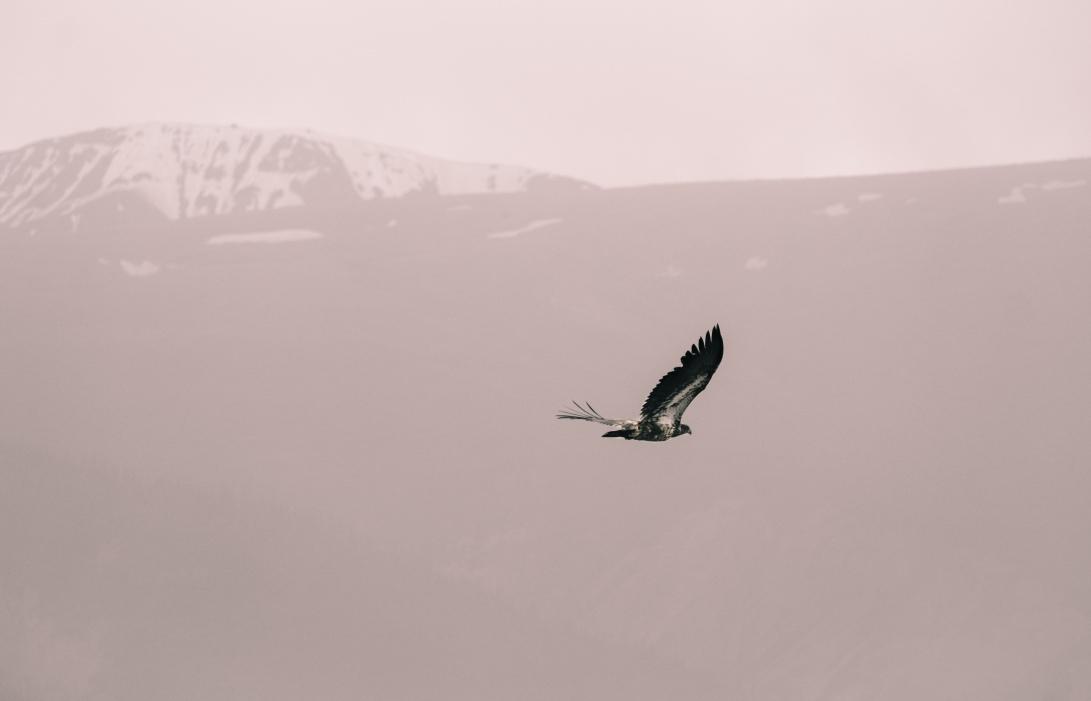 14 SAB Eagle