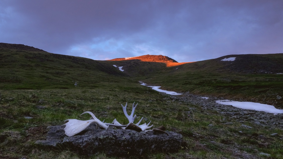 Antlers and afterglow