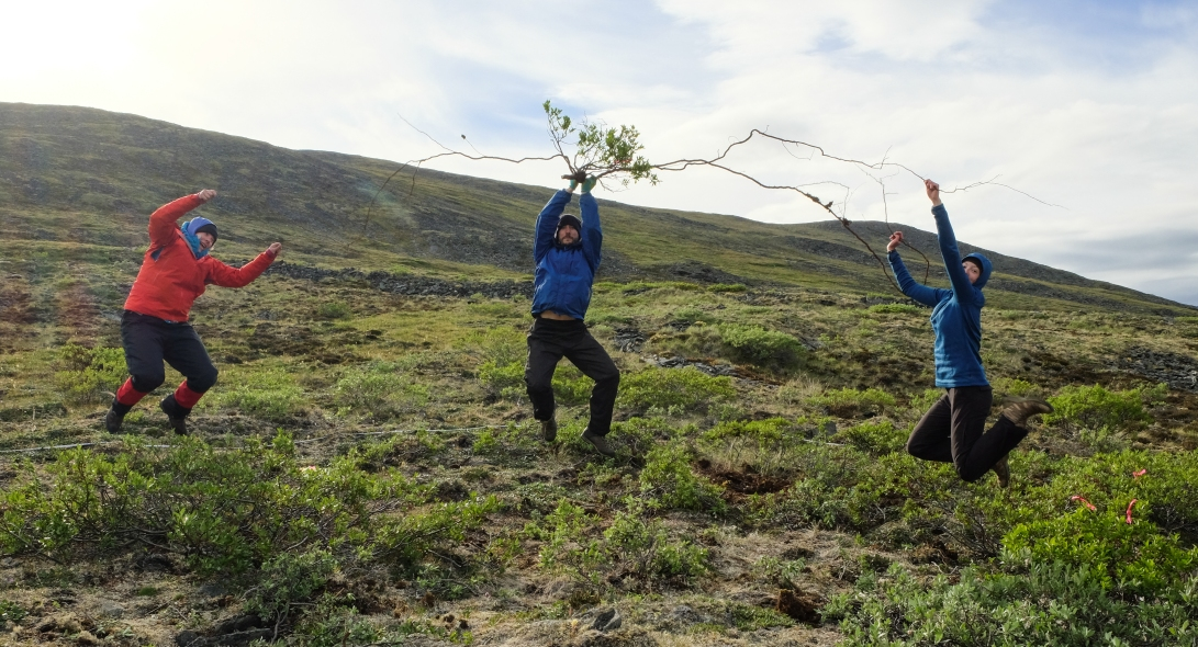 Salix antics