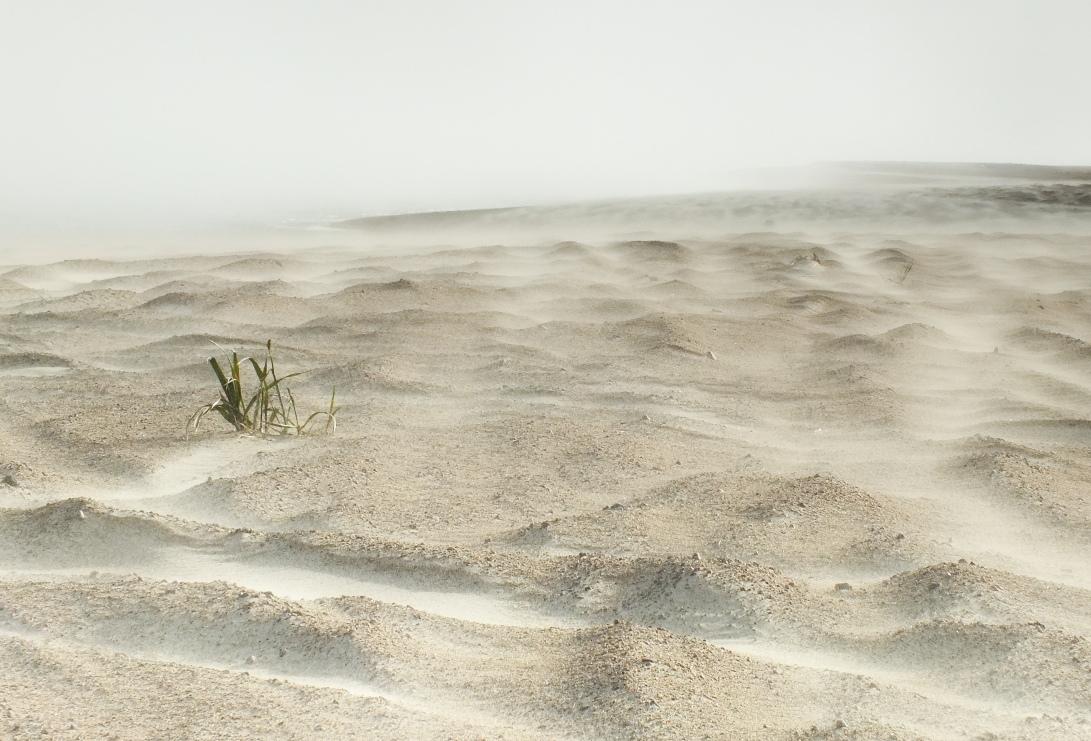 11 SAB Dune Dwellers