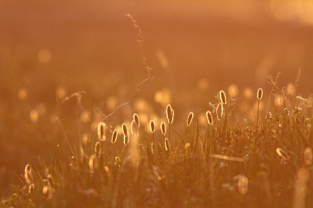 6 GND Sunset Grasses